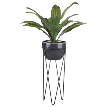 Plant on a Black Stand