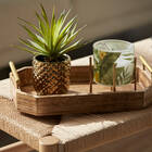 Golded Ceramic Potted Sword Grass