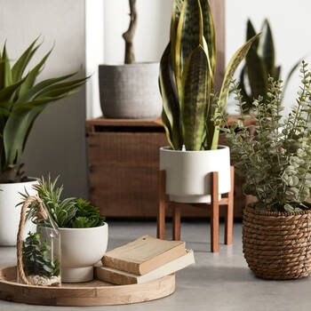 Succulents in Ceramic Pot