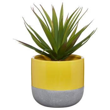 Verdure dans un pot en céramique
