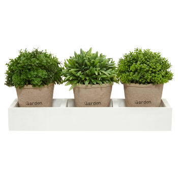 Set of 3 Potted Plants