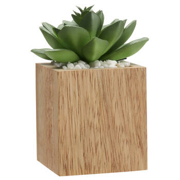 Agave avec pot en bois carré