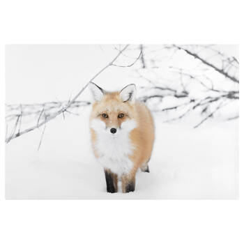 Snowy Fox Printed Canvas