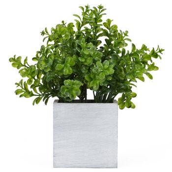 Verdure en pot