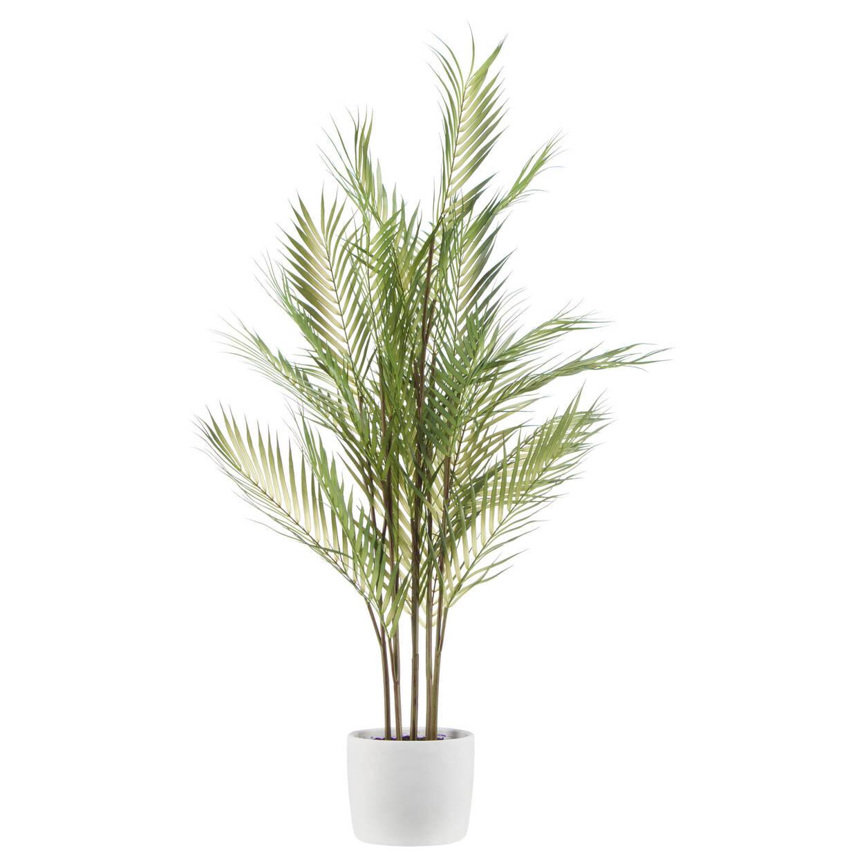 Plante tropicale en pot de céramique blanche