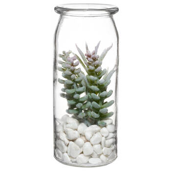 Succulent Plant in Glass Bottle with Pebbles