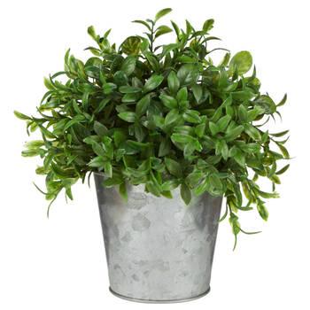 Herb in Galvanized Metal Pot