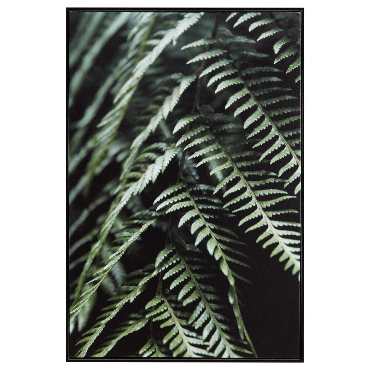 Fern Printed Framed Art