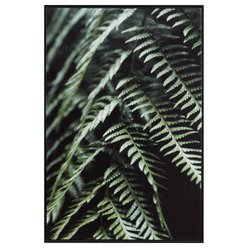 Fern Printed Framed Art