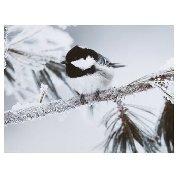Perched Bird Printed Canvas