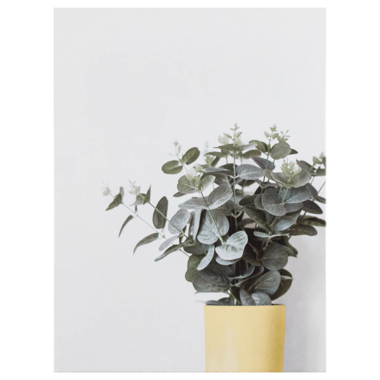 Tableau imprimé eucalyptus simplement vert