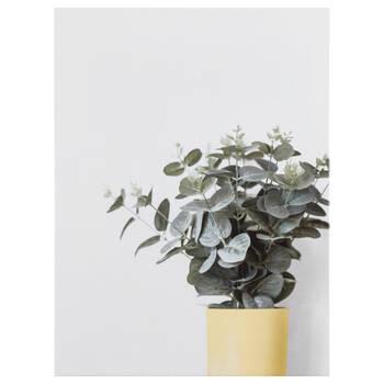 Simply Green Eucalyptus Canvas