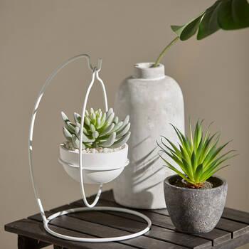 Succulent avec pot en céramique