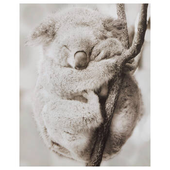 Sleeping Koala Printed Canvas