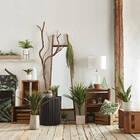 Hanging Spanish Moss