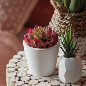 Red Succulent in a Cement Pot