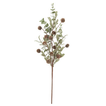 Eucalyptus and Pine Cone Branch