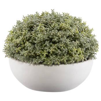 Succulent in Cement Bowl