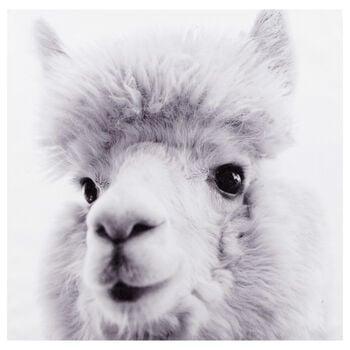 Llama Printed Canvas