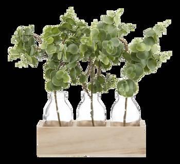 3 plants d'eucalyptus dans un pot en bois naturel