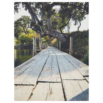 Jungle Pier Printed Canvas