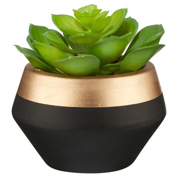 Succulent in Two-Toned Ceramic Pot