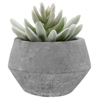 Cement Potted Succulent