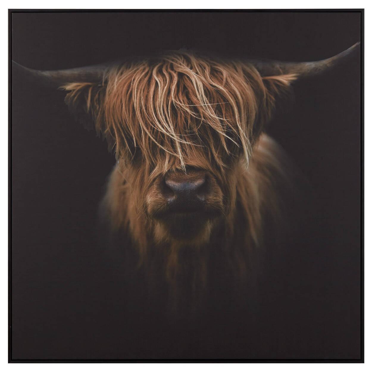 Scottish Highland Cattle Framed Printed Canvas