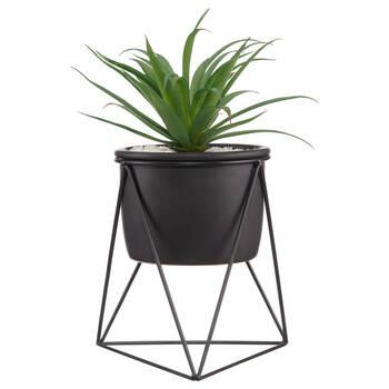 Plant on GEO Black Stand