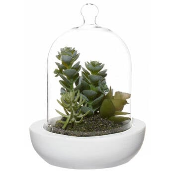 Succulent Plants in Glass Cloche