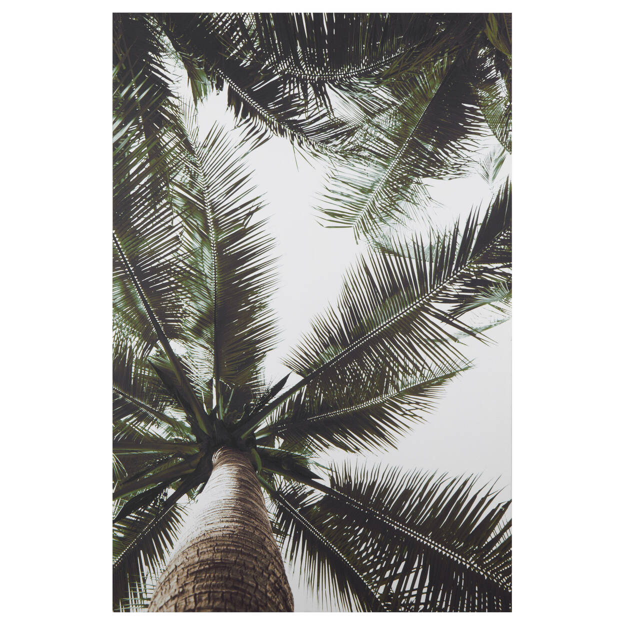 Palm Trees Printed Canvas