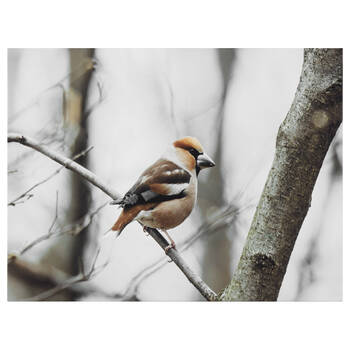 Perched Winter Bird Printed Canvas