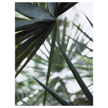 Tropical Leaves Printed Canvas