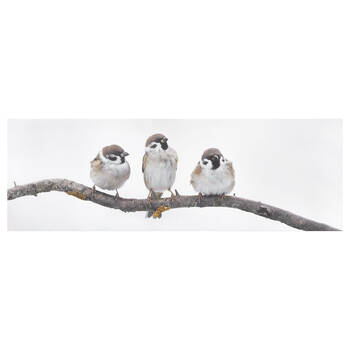 Three Little Birds Perched on Branch Printed Canvas