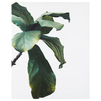 Banana Leaf Printed Canvas