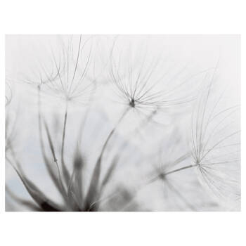 Windy Dandelions Printed Canvas