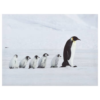 Penguins March Printed Canvas