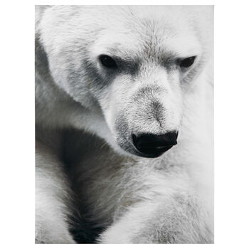 Polar Bear Printed Canvas