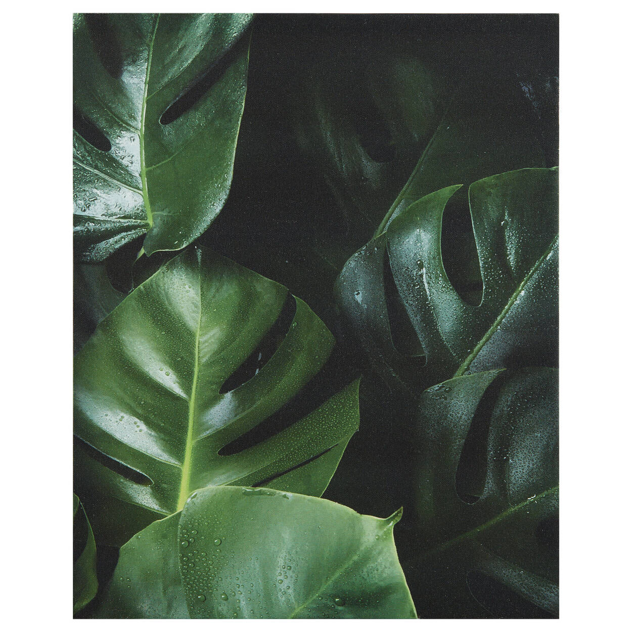 Monstera Leaves Printed Canvas
