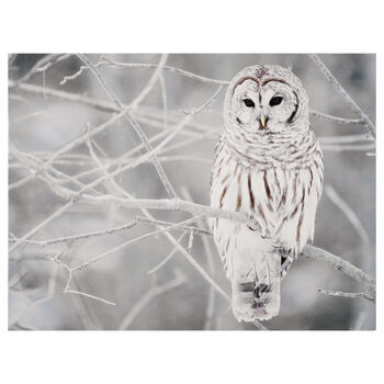 Perched Owl on Branch Printed Canvas