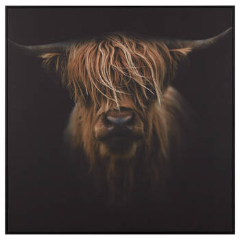 Scottish Highland Cattle Framed Printed Canvas