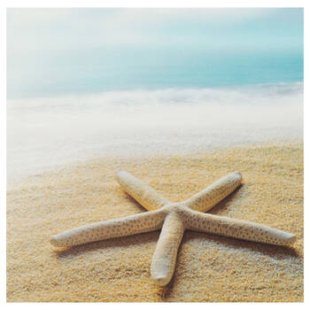 Starfish Canvas