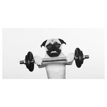Pug Lifting Weights Canvas