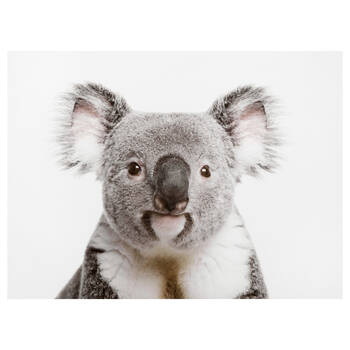 Koala Printed Canvas