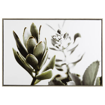 Framed Succulent Printed Canvas