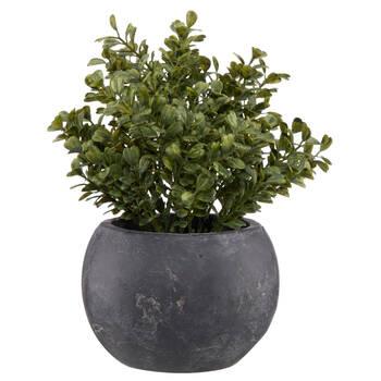 Eucalyptus in Slate Pot