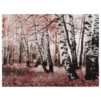 Orange Birch Trees Canvas