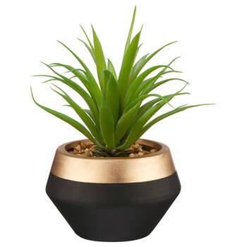 Plante succulente avec pot en céramique à deux tons
