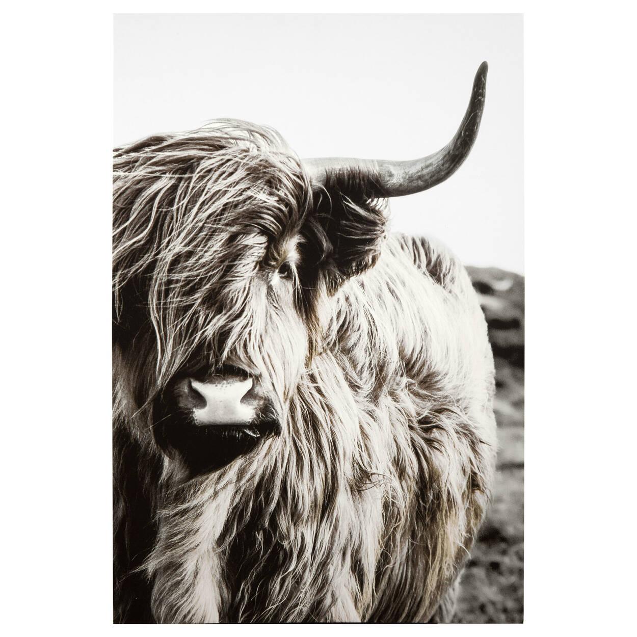 Tableau imprimé gentil taureau highland