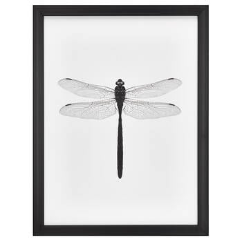 Dragonfly Printed Framed Canvas